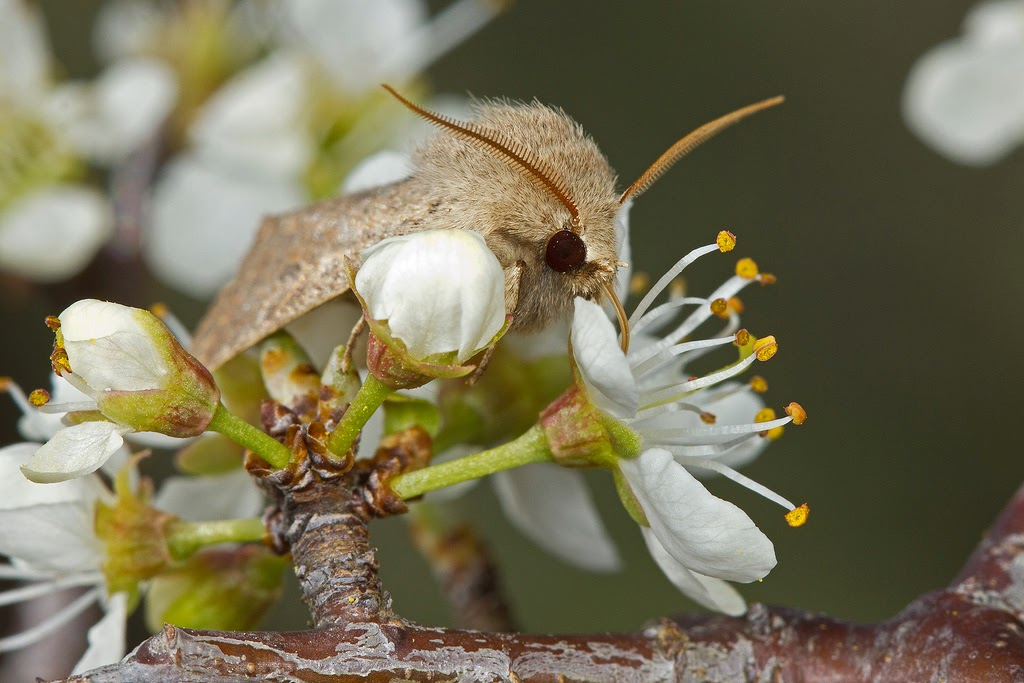 relationship among flowers fruits and insects