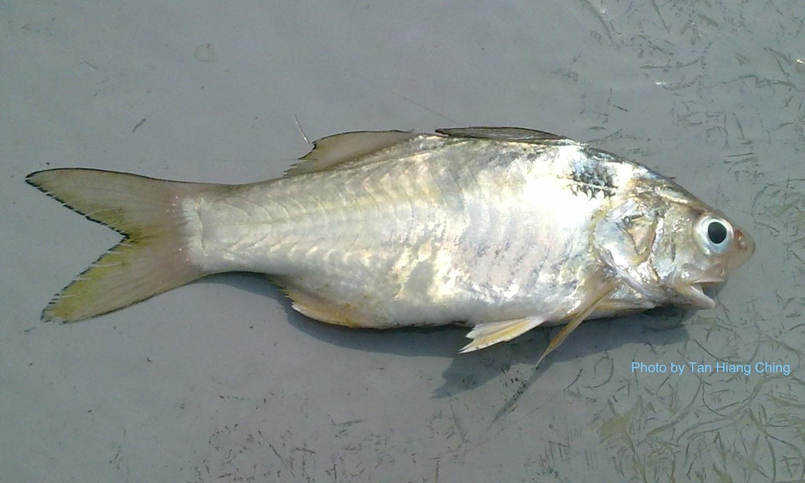 Threadfins - Talk About Fish