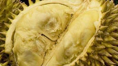 Buah durian, duren, bau durian, mabuk durian
