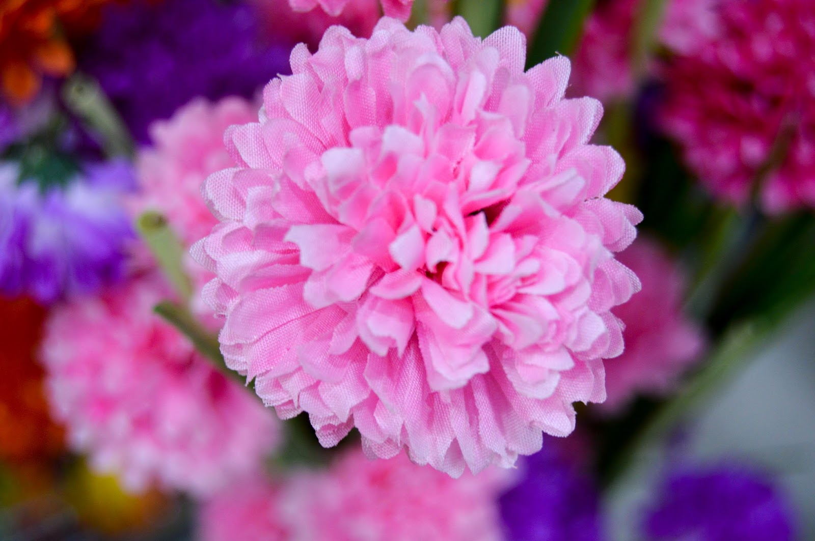 Pink and Purple Flowers Wallpapers & Free Stock Photos
