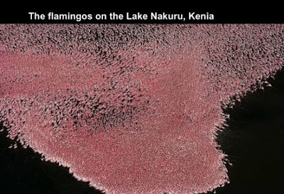 Flamingos en el Lago Nakuru  en Kenia