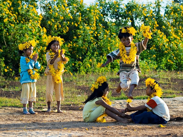 Northwest Vietnam attracts visitors by the beauty of wild sunflower or Tithonia diversifolia flowers