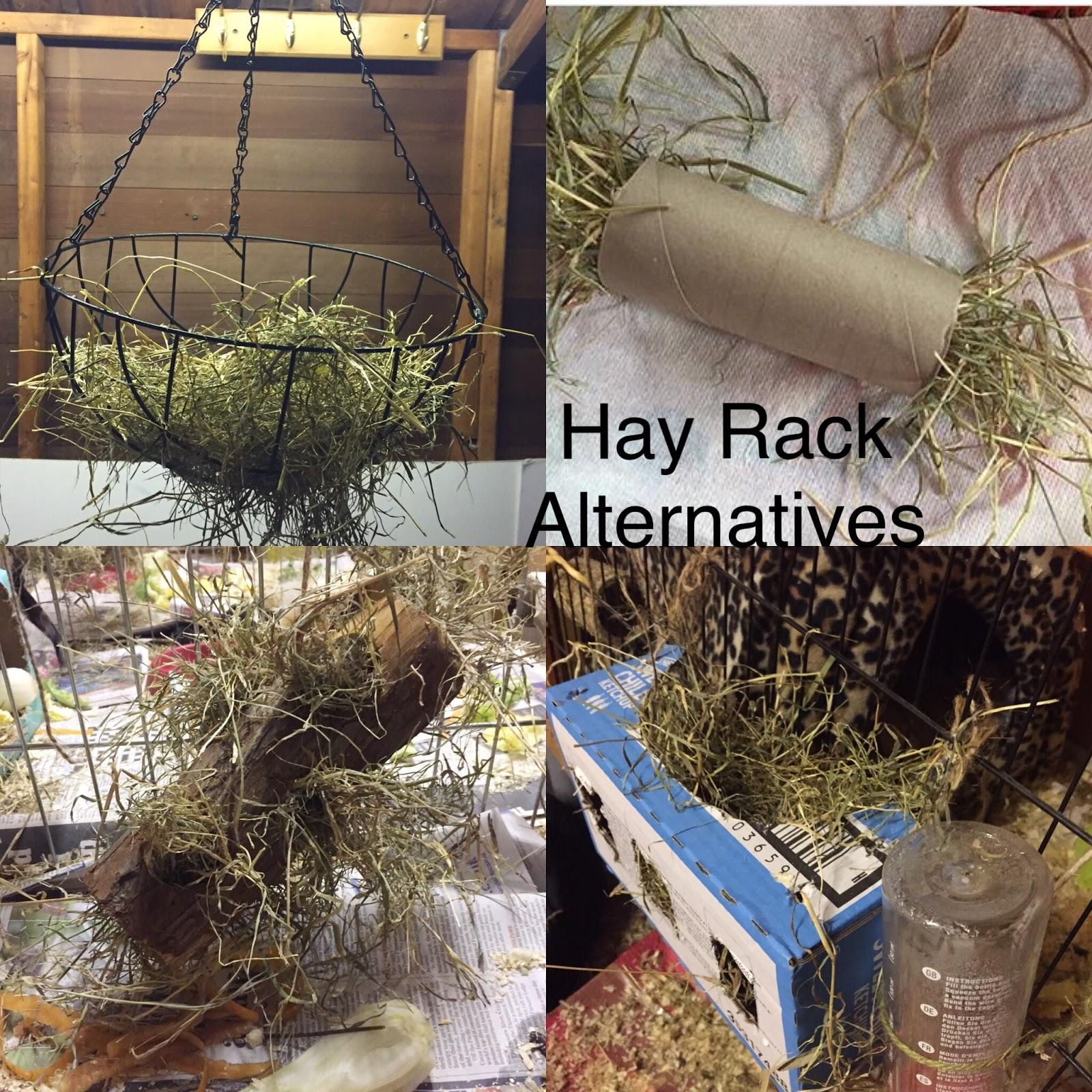 guinea pig hay rack alternatives diy
