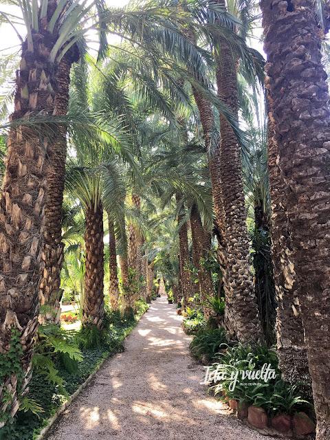 paseo con palmeras