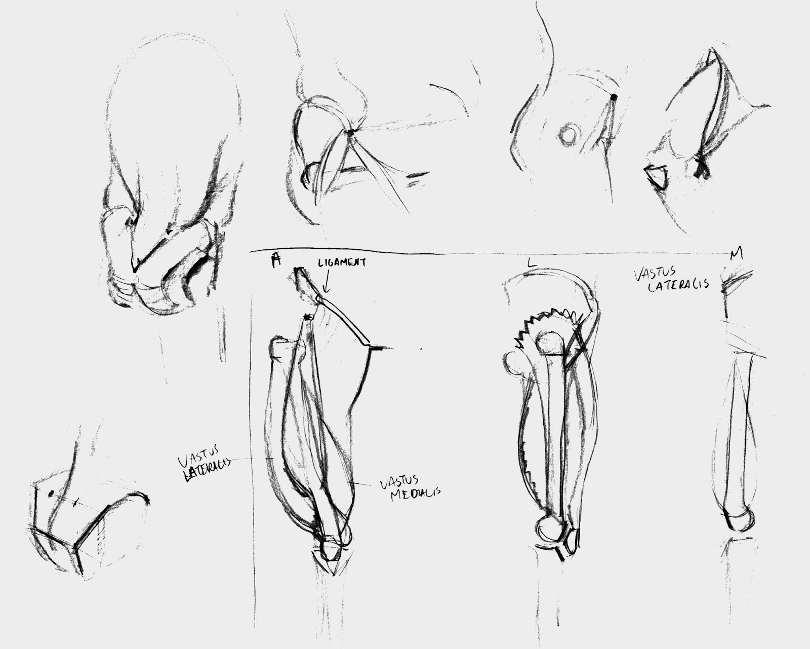 leg muscles drawing - photo #30