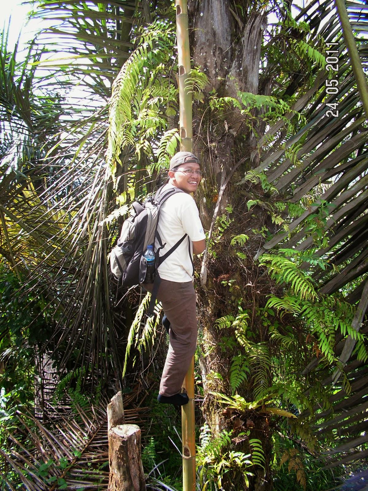 naik tangga bambu