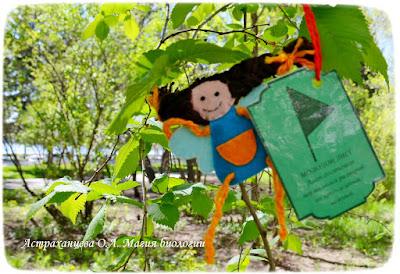 фенофазы, феечка, наблюдения весны, листья, карточка,пальчиковый театр