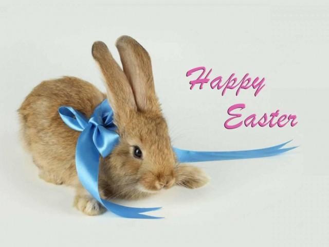 download besplatne slike za mobitele 640x480 Uskrs čestitke blagdani Happy Easter