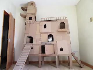 rumah kucing lucu unik