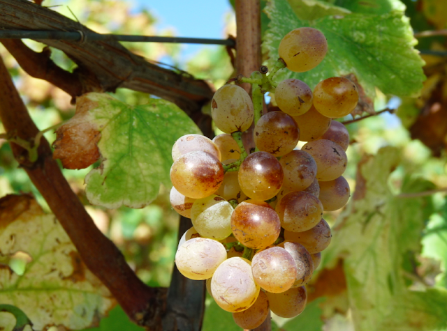 Итальянское вино 2015