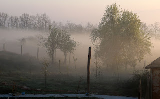 Mist rises between the trees