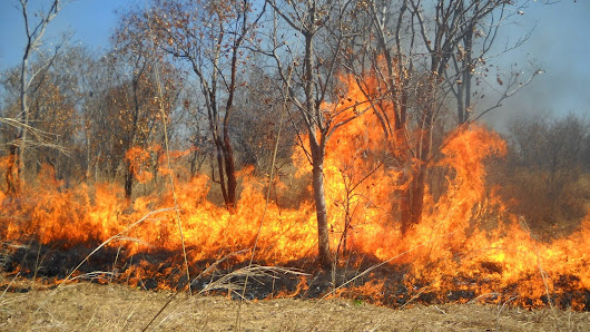 Auditing of preparedness for wildfire at Sharavathi wildlife sanctuary on 4/5th weekend of April