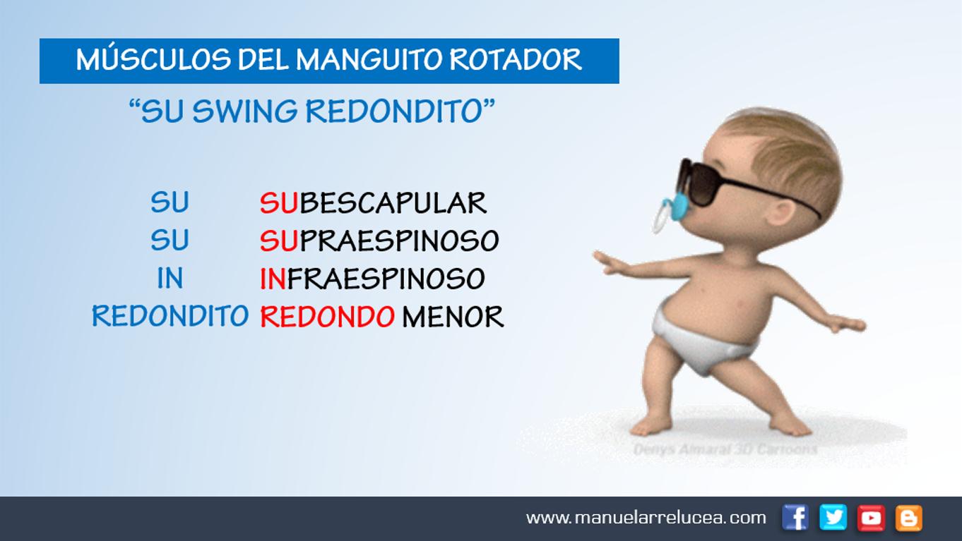 Anatomía y Fisiología: NEMOTECNIA - MANGUITO ROTADOR