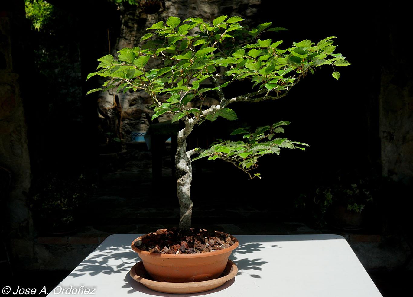 El jard n de la barrosa mis arbolitos peque os for Arbolitos para jardines pequenos