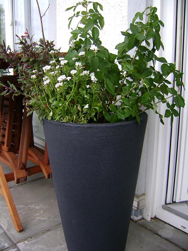 Pflanzkübel Für Rosen : terrassen und balkonbepflanzung pflanzt pfe und gef e ~ A.2002-acura-tl-radio.info Haus und Dekorationen