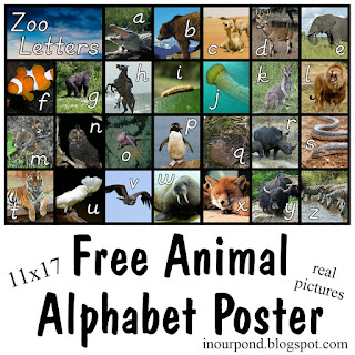 FREE Alpha-Zoo Poster with Real Animals