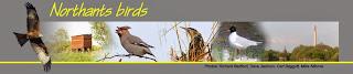 http://northantsbirds.com/