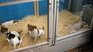 Βρετανία: Τέλος οι πωλήσεις σκύλων και γάτων στα pet shops