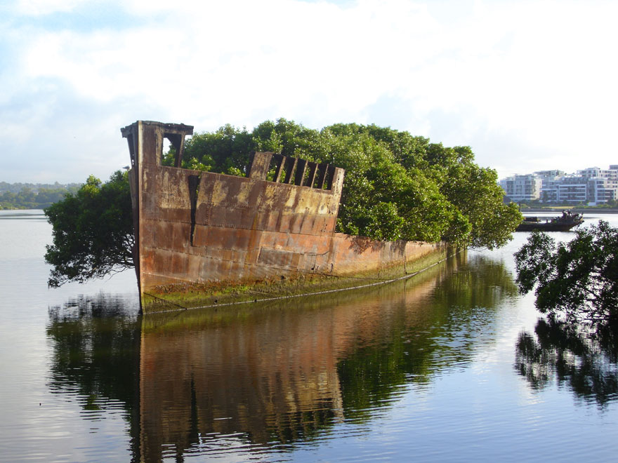 Life Finds A Way: 25 Plants That Just Won't Give Up - An entire ship succumbed to a miniature forest. I can't help but wonder what sorts of creatures call this abandoned ship home.