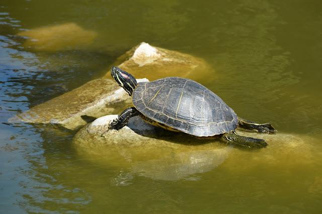 Jeronimos Monastery Lisbon turtle