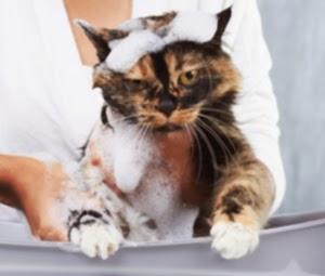 Prévention aux puces - garder les puces loin de vos animaux domestiques