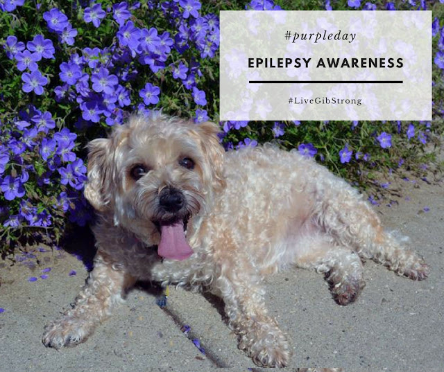 Ruby supports epilepsy awareness for humans and canines on #purpleday