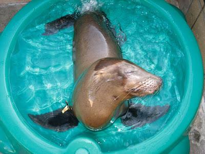 happy+seal - Volunteering - Kindness Matters
