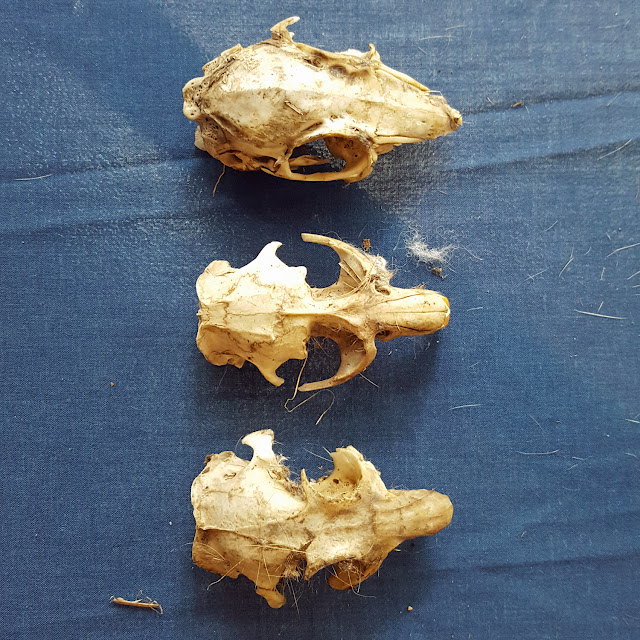 small skulls - What's on the Menu at Fort St. Vrain?