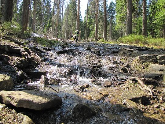 Potok przepływający przez szlak na Przełęcz Brona