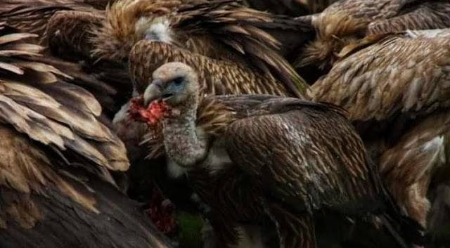 Sky Burial: Nature-friendly, Most Controversial Cremation in The World; Travel with Samal