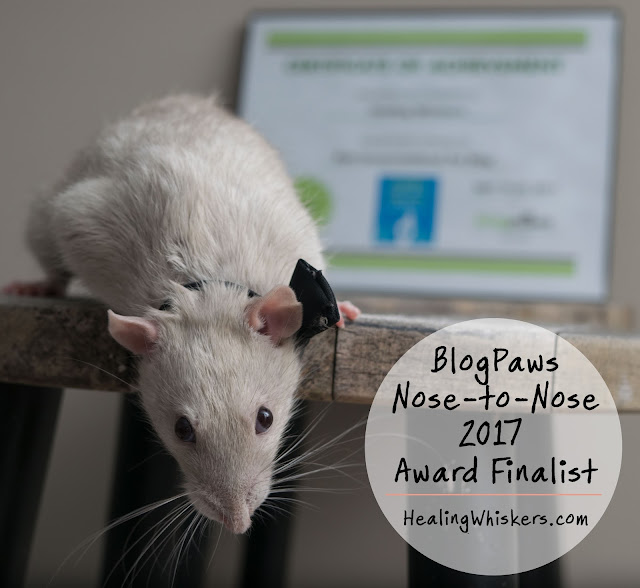 BlogPaws Nose-to-Nose 2017 Award Finalist