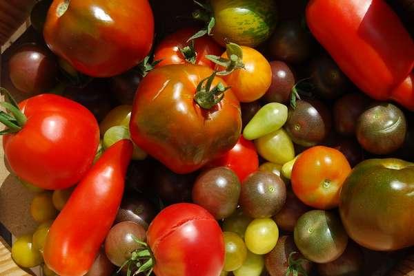 La tomate : fruit ou légume, découvrez ses vertus