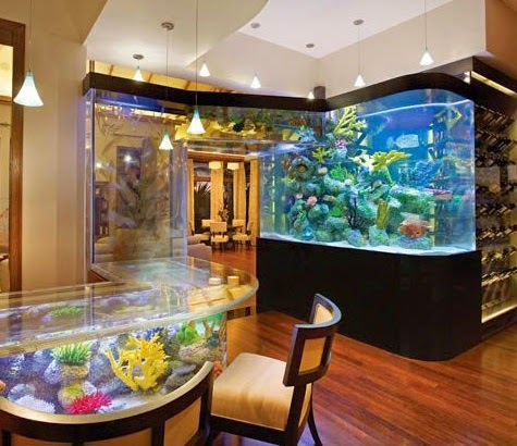 large aquarium idea
