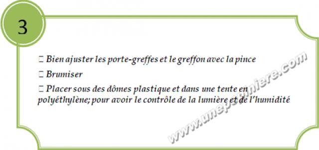 greffage concombre3