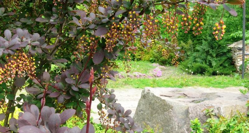 Кременецький ботанічний сад милує око 📹