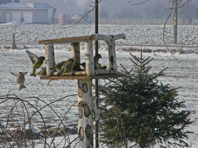karmnik, zima, ptaki, dokarmianie