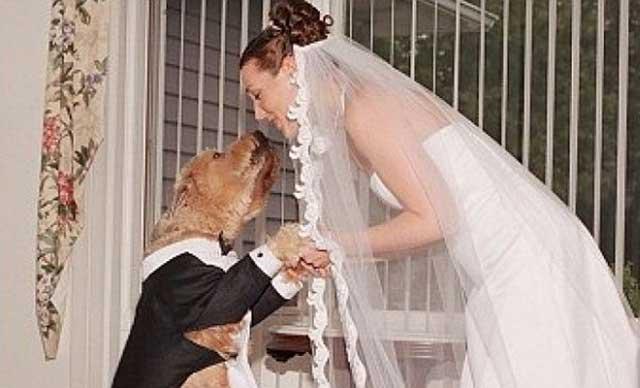 Emily Mabou Menikah Dengan Anjing