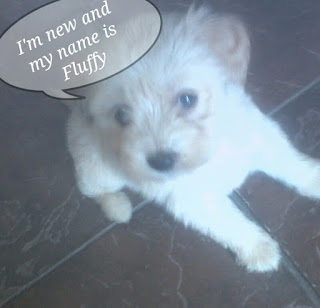 Fluffy the new puppy