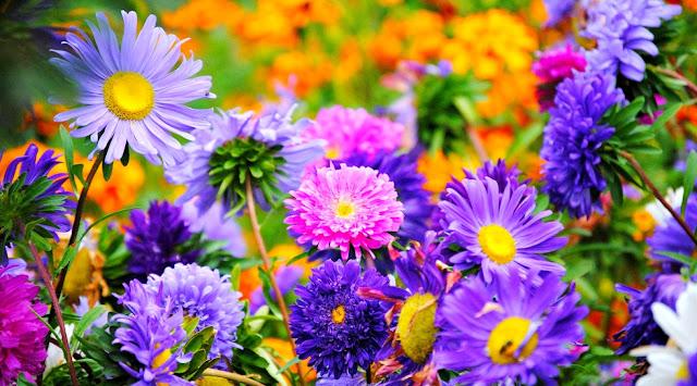Gambar Wallpaper Bunga Cantik Indah Caption Instagram Keren