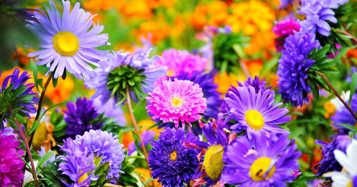 Contoh Gambar Vas Bunga Dari Botol Aqua - Contoh O
