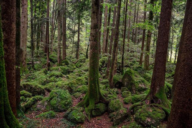 Familienwanderung in Ruhpolding  Märchenwald und Freizeitpark  Wandern im Chiemgau  Wanderung-Ruhpolding 10