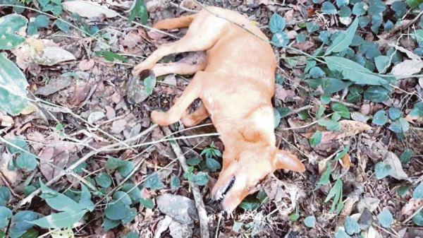 Anjing selamatkan keluarga pemilik daripada serangan ular sawa