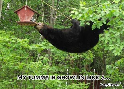 Proof Bears Are Just Big, Furry People |Funny Black Bear Family