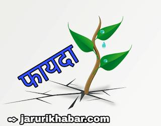 जरूरी खबर, पान की खेती की पूरी जानकारी, farmers  news,  farmers  subsidy