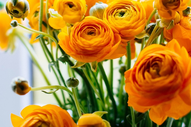Know Which Flowers Can Bring You Good Luck