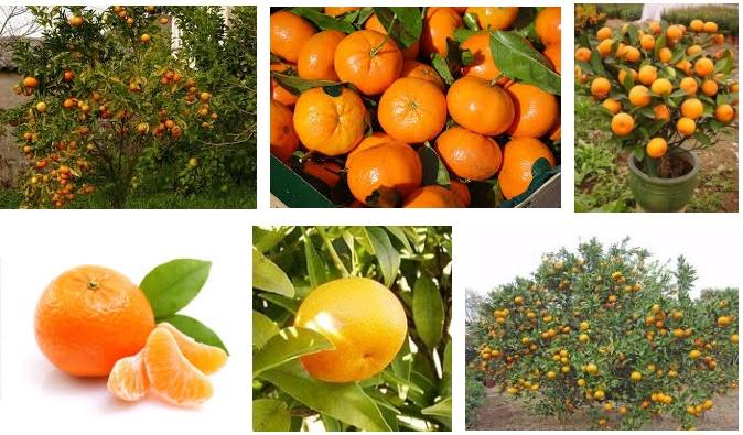 Lo sapevate che il mandarino combatte ansia e insonnia? Ecco i benefici per la Salute