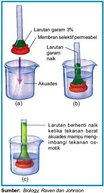 Osmosis Dan Difusi : osmosis, difusi, Transpor, Pasif, Difusi, Osmosis