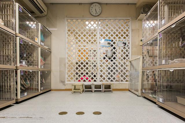 猫カフェ西国分寺シェルター、店内の部屋3つのうち2番目に大きい部屋の写真 二枚目