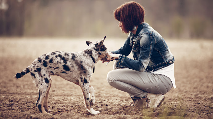 Wallpaper: Girl and the Puppy