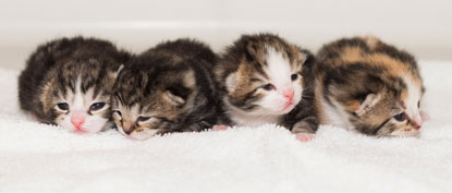 Cats Protection Bridgend kittens